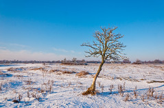 Alleen - Alone (RuudMorijn) Tags: life blue winter light sky sunlight white snow cold tree nature dutch field weather silhouette rural landscape outdoors one countryside frozen cool scenery solitude frost day alone branch loneliness view natural outdoor snowy horizon country sneeuw scenic natuur frosty scene boom explore freeze single land lone environment chilly lonely solitary desolate kale chill survival brabant crooked struggle alleen noordbrabant survive kaal vast koud eenzaam wintry brabants natuurgebied eenzame scheve abigfave deheen overleven dintelsegorzen ringexcellence scheefstaande