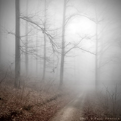 white wall (Paul Petruck) Tags: trees mist nature square landscape nebel forrest wald bume baum weg