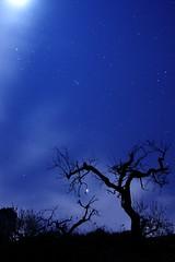Muerte a la luz de la Luna (Alfredo Blanquer (Konqueror)) Tags: peregrino27life