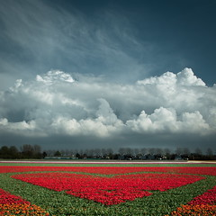 Heart (Talliebally - on & off) Tags: sky colour art dutch clouds square pretty heart tulips fave engaged luchten typicallydutch bollenstreek hollandse talithahoppe