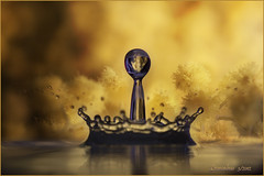 gocce di mimosa ... (EXPLORE 9/03/2012 #50) (leon.calmo) Tags: canon mimosa riflessi gocce 8marzo festadelladonna eos50d bestcapturesaoi leoncalmo elitegalleryaoi