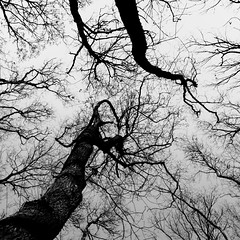 Dancing forest (Massimo Margagnoni) Tags: world trip trees blackandwhite bw italy white black art 6x6 nature alberi digital forest canon landscape poetry solitude alone photographer digitale natura hasselblad dreams 5d poesia viaggi nero paesaggio biancoenero massimo 2012 bosco mkii mondo foresta naturepoetry absoluteblackandwhite bestcapturesaoi margagnoni