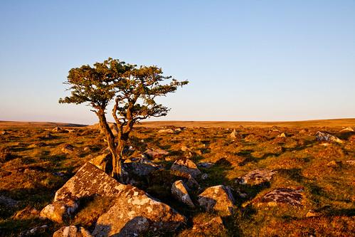 Dartmoor-211