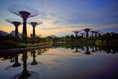 DSC01567_DxO (teckhengwang) Tags: singapore angle sony wide ultra uwa a7r gardensbythebay sal20f28