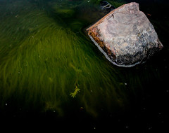 Murky. (Derek Keeling Photography) Tags: black seaweed macro green water rock canon rebel t3 murky