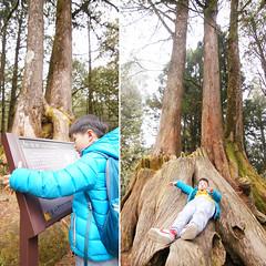 DSC01611 (YUKI Hsu / nlyuki) Tags: chiayi   sacredtree   shenmu alishannationalscenicarea 2y2m 6y3m