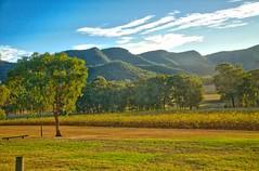 Wine Tasting (Eustaquio Santimano) Tags: beautiful evening vineyard view australia nsw tyrell wines pokolbin tyrells