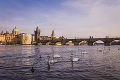 Charles Bridge (timmsi) Tags: old city bridge sunset 35mm canon river swan europe prague 14 sigma charles praha medieval most 6d karlv