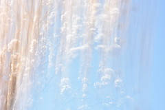 ICM flowers (LidyvN) Tags: blue sky mist flower tree rain rose garden spring wind blossom outdoor icm prunus