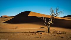 The path to Hiddenvlei (Julien Nyczak) Tags: africa sunset sun sand nikon desert dune nikkor namibia namib deadvlei namibie dune45 1685 namibnaukluft hiddenvlei sossousvlei d7100 1685mm nikond7100