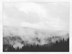 IMG_1334 (Bruno Meyer Photography) Tags: trees blackandwhite bw fog skyline contrast forest landscape lost photography drive woods raw nowhere rise ontheroad edit myst blackandwhitephotography iphone instagram