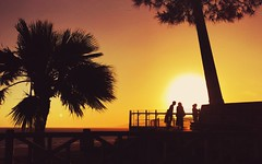Sunset rendezvous (Ryan Vaarsi) Tags: california trees sunset losangeles santamonica westcoast ilovela mobilephotography bestcoast discoverla wearegrryo iphone6splus