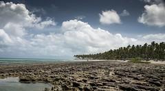 Brazil - Tamandar (Nailton Barbosa) Tags: nikon d800 brasil brazil braile bresil brsil brasilien pernambuco pe tamandar litoral mar oceano nuvens praia areia arrecifes de coral clouds nuvole nordeste