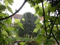 Spinnennetz ragnatela (martini_bianca) Tags: ragnatela ragna spinne spider web spinnennetz weinstock vite regen pioggia verde grn garten giardino giardin toile