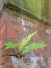 - (txmx 2) Tags: hamburg wall farn fern whitetagsrobottags whitetagsspamtags