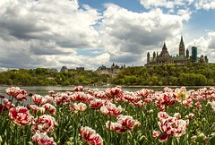 Ottawa (Karen_Chappell) Tags: travel pink flowers blue white ontario canada green nature floral clouds landscape spring scenery cityscape ottawa scenic parliament tulip parliamenthill ottawariver tulipfestival