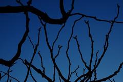 baum himmel muster (2) (fdfotografie) Tags: silhouette flora outdoor pflanze himmel dslr baum muster abstrakt gegenlicht platane strukturen schattenriss farbfoto querformat helligkeitsgeflle