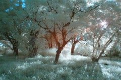 IMG_4042 (ysrl) Tags: canon ir taiwan infrared tainan eos350d ef24mmf28 ir