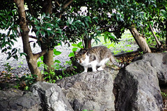 Today's Cat@2016-06-24 (masatsu) Tags: cat pentax catspotting mx1 thebiggestgroupwithonlycats