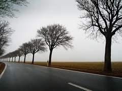 Some Trees (parkerbernd) Tags: road autumn trees winter sea mist fog germany island lumix haze alley nebel baltic rainy leafless bume fehmarn allee ostholstein sometrees lx3