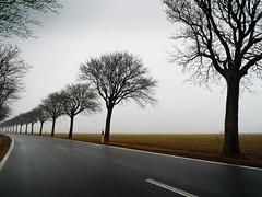 Some Trees (parkerbernd) Tags: road autumn trees winter sea mist fog germany island lumix haze alley nebel baltic rainy leafless bäume fehmarn allee ostholstein sometrees lx3