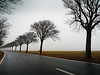 Some Trees (parkerbernd) Tags: road autumn trees winter sea mist fog germany island lumix haze alley nebel baltic rainy leafless bäume fehmarn allee ostholstein sometrees lx3
