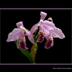 ...linda (para Itala) (juntos ( MOSTLY OFF)) Tags: birthday orchid flower beauty friendship amiga linda chapeau richards oe oa artisticphotography musictomyeyes masterclass bellissima themoulinrouge firstquality theperfectpicture imagepoetry artistoftheyear mywinners abigfave soe1 visiongroup heartsawards flickrshearts dreamphoto soe2 theperfectphotographer peaceawards beautyselection freedomhawk thelightpaintersociety saarysqualitypictures empyrianflora thecubeexcellencygallery imagesofthelittleprince ablackrose davincimemories thegoldenpowerclub mammasbloomers richardstopgallery magicunicornverybest magicunicornmasterpiece magicunicornmasterpieces richardsflorandfauna 2mmroyalstation fleursetpaysages flickrperfect betterthangood1 asquarelegend goldstar1 speakinglove masterclasselite fabtop2429 chariotofartists4 admntstalk weirenasflowerfav cremedelacreme50