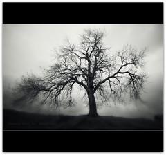 I Found A New Tree... (Samantha Nicol Art Photography) Tags: white black blur tree art nature silhouette dark mono scotland nikon samantha drama vignette nicol