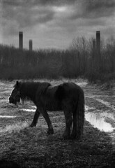 Horse With No Name (*K*aren) Tags: blackandwhite horse film grain noname zuiko50mm olympusom1n wwwphotomusocouk