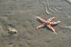 On the beach #2 (larigan.) Tags: uk england seaside sand starfish unitedkingdom ripples lowtide bexhill britishness coastalresort larigan phamilton gettyimageswants