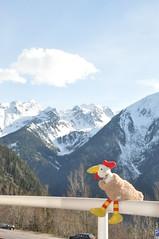 DSC_4168 (huhn (@mamg.de)) Tags: chicken tirol huhn tyrol wellness jerzens mamg