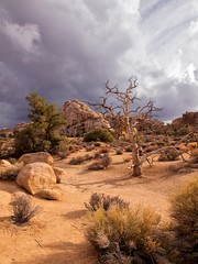 Joshua Tree National Park, Hidden Valley (Explored) (darthjenni) Tags: california park trip travel vacation tree nature landscape outdoors aperture rocks desert riverside nps joshua hike trail national mojave joshuatreenationalpark ptlens jotr jtnp colorefexpro30 dfine20 olympuszuikodigitaled1442mmf3556 sharpenerpro30 olympuse620 viveza2