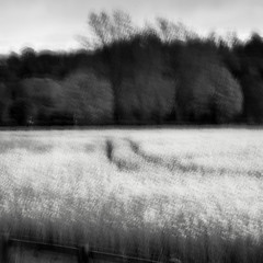 Trees and Field (Pete Clark Landscape) Tags: camera england abstract field canon square landscape photography mono cheshire chester lee clark pete filters icm broxton