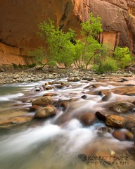 Dogwoods in the Zion Narrows, Utah (Robert Pearce Photography) Tags: trees red green water leaves river landscape utah nationalpark nikon october sandstone rocks sigma cliffs zion zionnationalpark narrows dogwoods virginriver springdale 2011 flowingwater giottos nikond200 robertpearce robertpearcephotography indurophq3