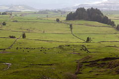 So Miguel Pastures (timsackton) Tags: green portugal animal animals mammal cow cattle cows pasture mammals animalia mammalia domesticated eventoedungulates chordate chordates chordata eventoedungulate metazoa artiodactyla ilhadesomiguel arrifes bosprimigenius estrregional82