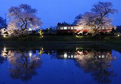 Station (Y*WADA) Tags: water japan digital spring nikon     distillery   fiowers   colorphotoaward