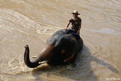 Baño en el río - Tailandia (Gabriel Bermejo Muñoz) Tags: travel camp elephant animal rio rural training work river asian thailand bath asia working tailandia chiangmai worked baño trainer elefante asiatico maetaman adiestramiento asianlife elephanttrainingcamp campodeelefantes elephantworkingcamp gabrielbermejomuñoz