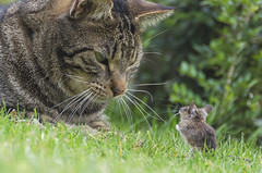 Tom and Jerry (Gies!) Tags: animals cat garden mouse conversation