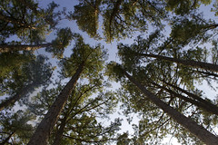 (Jackie.135) Tags: trees sky green nature adventure explore exhausted