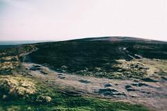 scottish highlands (floriax75) Tags: travel light wild tree tourism nature landscape licht scotland highlands path natur scottish landschaft schatten wandern weg reise schottland scottishhighlands schn karg visitscotland birkhall grosbritannienundnordirland