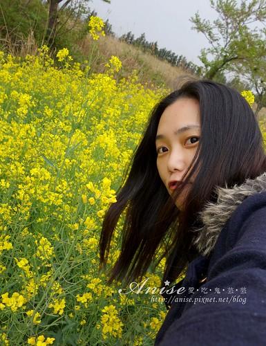 6濟州島油菜花_003.jpg
