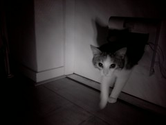 20160504-010150-i-1 (Catflap central) Tags: camera pet cats cat pi raspberry meow catdoor catflap kattenluik katzenklappe catflapj2nnl