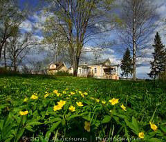 Muranovo (Аlhemund) Tags: travel flowers flower nature garden landscape nikon russia outdoor flowerbed mansion россия мураново muranovo усадьба d7000 тютчев