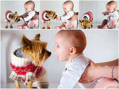 When the dog is a FRIEND! (mrs_fedorchuk) Tags: family dog baby love home yorkie collage canon child photoshoot happiness son yorkshireterrier photosession photocollage babyboy dogandbaby canonphotography inndoor babyandthedog