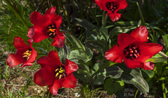 Red Spring (KF-Photo) Tags: red rot stempel tbingen roteblten pfrondorf