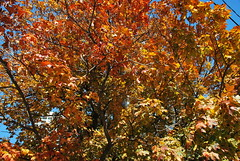 fall_287 (Sascha G Photography) Tags: autumn trees toronto color tree fall leaves leaf nikon seasons waterfront lakeshore indiansummer d60