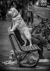 Man Vs Dog (Daz Smith) Tags: city uk portrait people urban blackandwhite bw dog man streets blancoynegro monochrome canon blackwhite bath sitting candid citylife thecity streetphotography canine sat canon6d dazsmith bathstreetphotography
