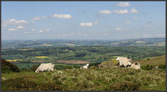 High Sheep .. (Picture post.) Tags: green nature clouds landscape interestingness sheep bluesky hills fields paysage arbre springtime