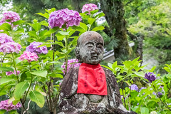 Buddha surrounded by Flowers  (Sharleen Chao) Tags: travel summer japan landscape temple day buddha rainy  hydrangea 1855mm nara      fuijifilm   xt1   yatatemple