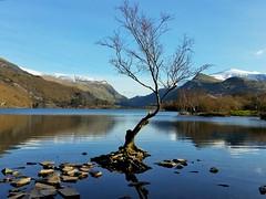 The lonely tree... (Lee~Harris) Tags: sky lake mountains tree water wales landscape rocks bluesky snowcapped snowcappedmountains llynpadarn